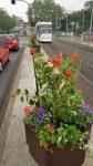 Foto eines Blumenkasten auf der Heinrichsbrücke mit einer Straßenbahn im Hintergrund